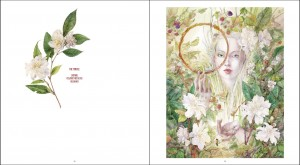 Descants and Cadences - a new art book by Stephanie Law